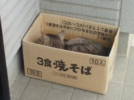 Ca3k0856